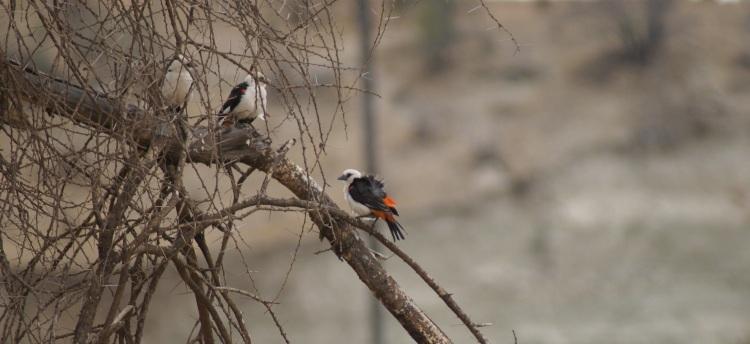 Bird Pranayama by Eva the Dragon 2013