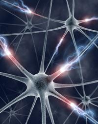 neuron2 synaptic transmission