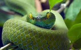 snake green awake