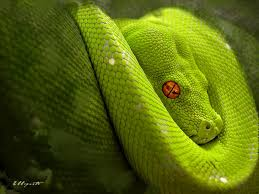 snake green sleeping